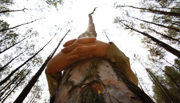 Mokslininkų verdiktas: vasarą kiekvienas žmogus turi apkabinti medį